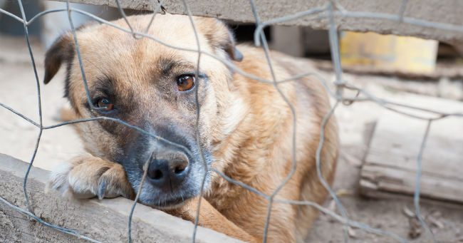 Canile-lager sequestrato a Olbia: ospitava 500 cani ma poteva contenerne 300
