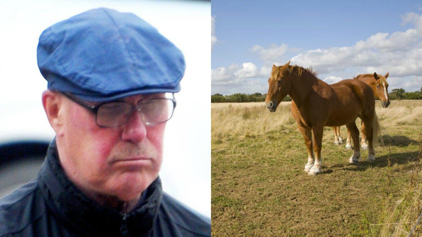 Non riesce a smettere di masturbarsi sui cavalli: rilasciato, viene arrestato dopo meno di 24 ore