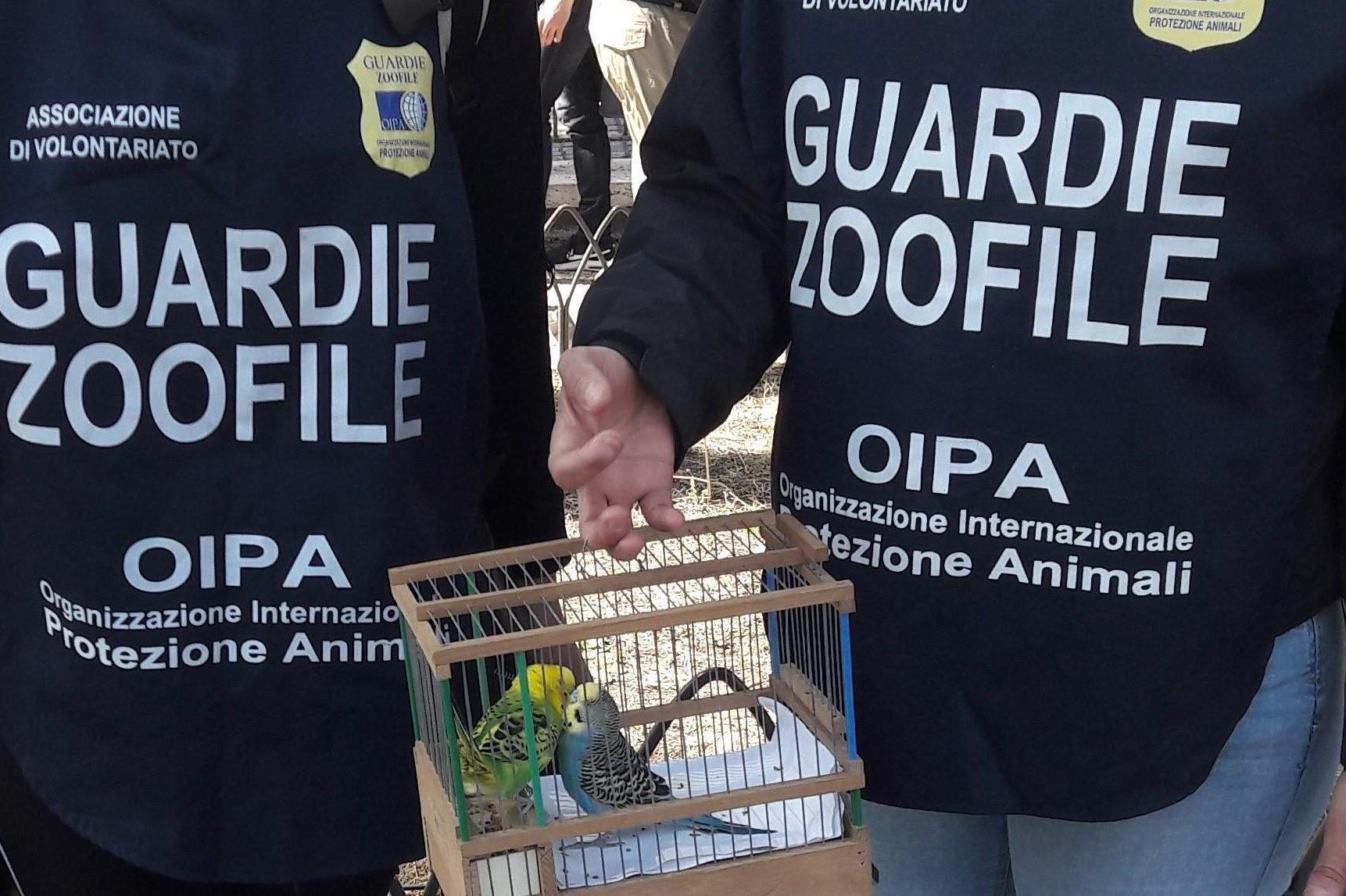 Due pappagallini sfruttati per le foto con i turisti ai Fori Imperiali: denunciate due persone