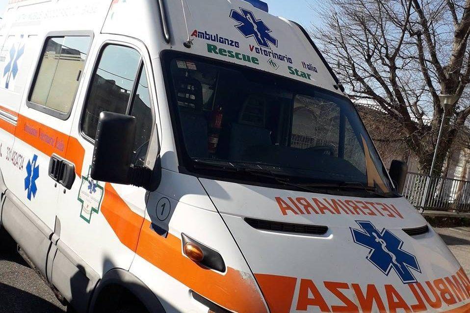 Varese, arriva la prima ambulanza veterinaria: attiva 24 su 24 per soccorrere gli animali domestici