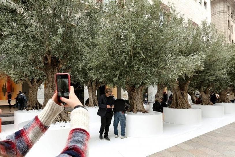 Design week, al Duomo di Milano spunta un bosco di ulivi secolari