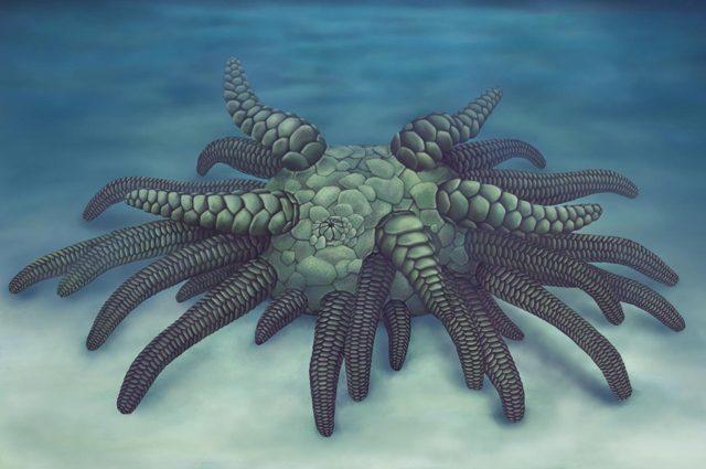 Cthulhu emerge dagli abissi dopo 430 milioni di anni, per la gioia dei paleontologi