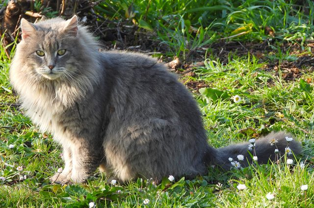 """I gatti capiscono i loro nomi, ma possono """"fingere"""" di non sentirti: la ricerca"""