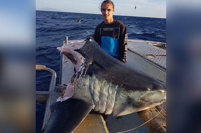 Testa mozzata di un grande squalo mako trovata in Australia: mistero sul responsabile