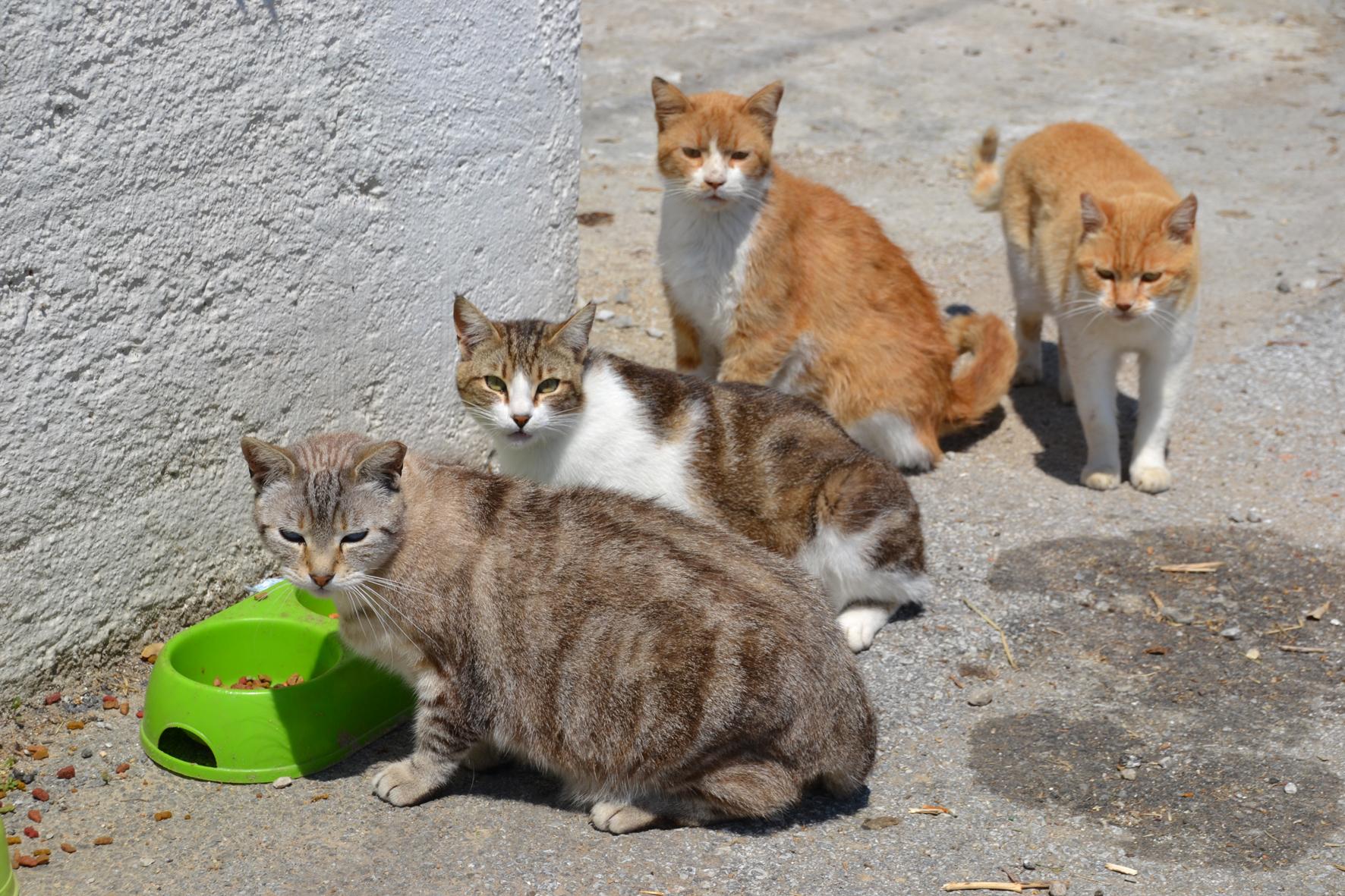 Ttd Cat Food