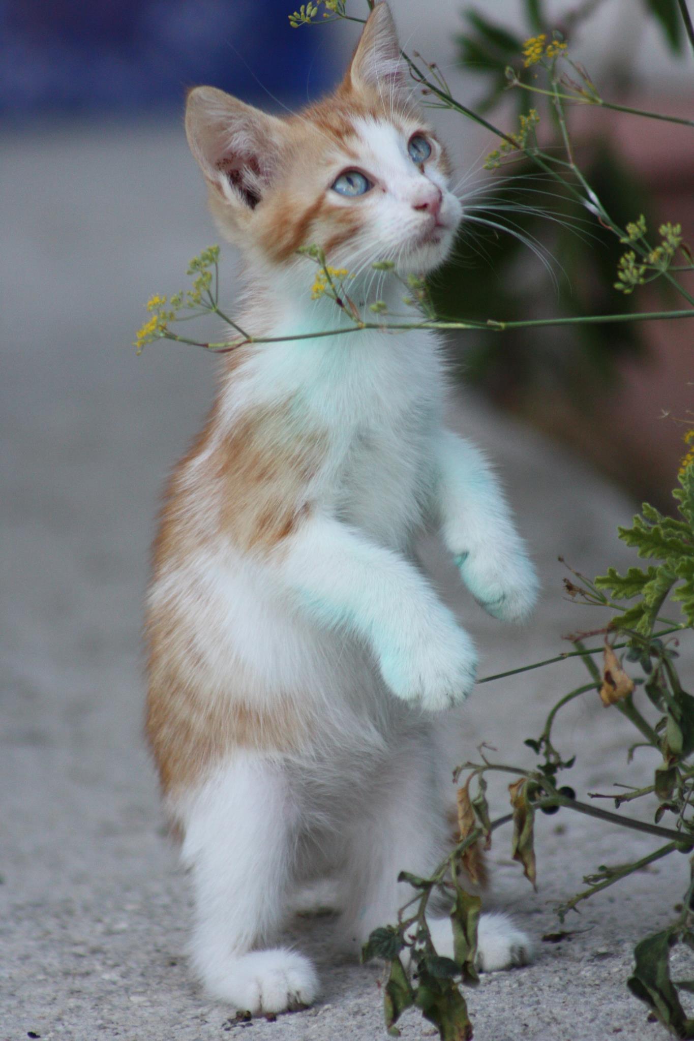 Smilla Cat Food Website