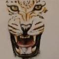 leopardstarxox