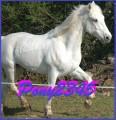 pony2345