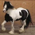 lovehorses101