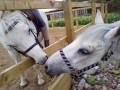 horsefreakxx