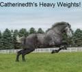 cat's heavy weights!