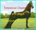 tennessee champions