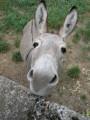 dreamchaser donkeys