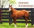 newton wanderers