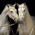 call of andalusians