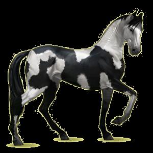 Cavalo de passeio Akhal-Teke Castanho