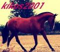 kikos2001