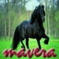 mavera