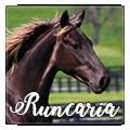 runcaria