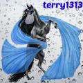 terry1313