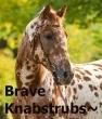 brave knabstrubs~
