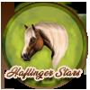 *¤ haflinger star ¤*