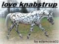 love knabstrups