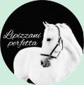 ~lipizzani perfetta~