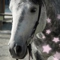 jin jang horses ☯