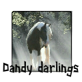 dandy darlings