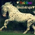 ❤️ rainbow knabstrups ❤️