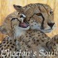 ξ cheetah's soul ξ