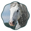 legends of percheron