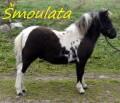 Šmoulata
