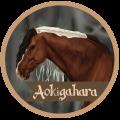 » aokigahara «