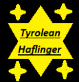 tyrolean haflingers