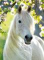 perry horses