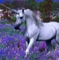 خيول بوق على جبهته