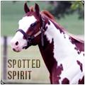 spotted spirit