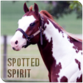 spotted spirit