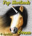 top shetland's dream
