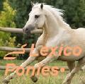 ے lexico ponies•