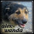 alex-wanda