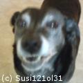 susi121ol31