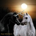 unicorn2009