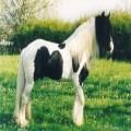 horsegirl15