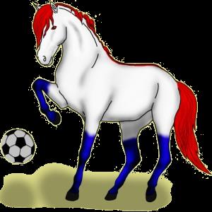Reitpferd Araber Rotbrauner