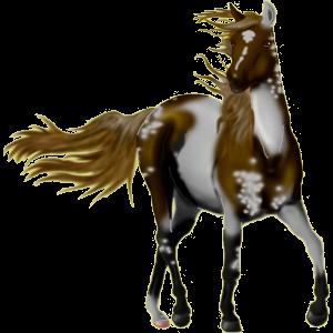 Reitpferd Andalusier Brauner