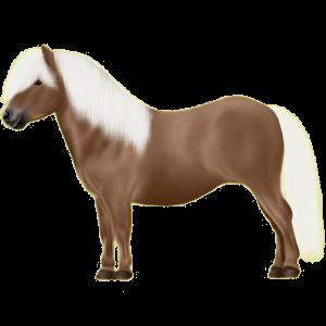 Pony Deutsches Reitpony Dunkelfuchs mit heller Mähne