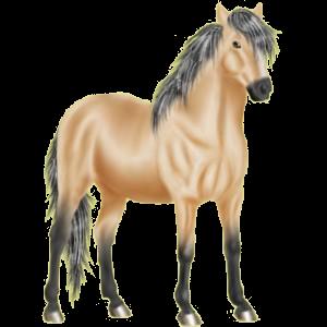Reitpferd Mustang Brauner